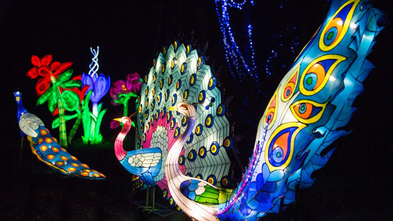 Magical Lantern Festival returns to light up the Botanical Gardens