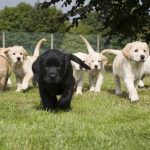 Can You Help Name New Guide Dog Puppy?